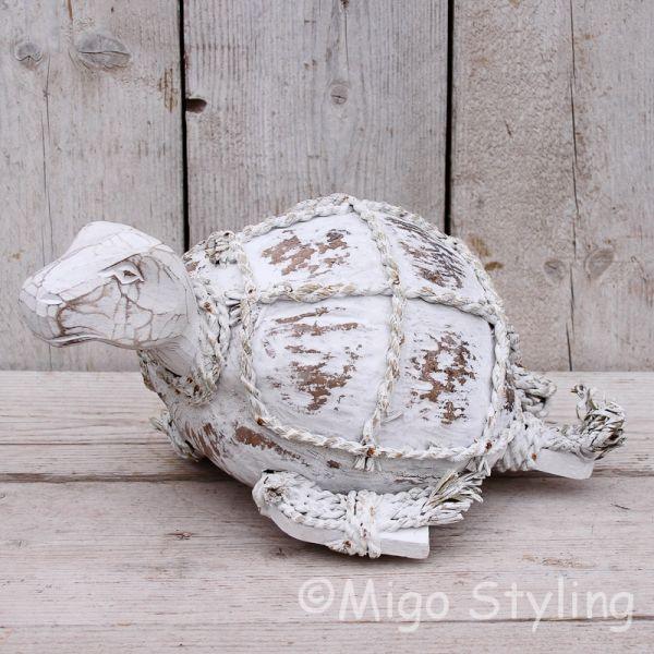 Kokosnoot schildpad
